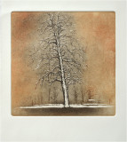The tree in the snow