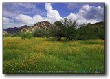 Arizona : Dragoon Poppy Valley
