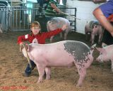 Showing a pig