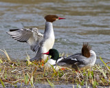 Waterfowl and Shorebirds and Waders