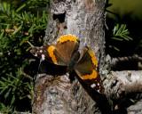 butterflies_2012