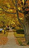 Autumn on Main