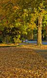 Fall in the Boro