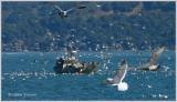 seagull heaven.jpg