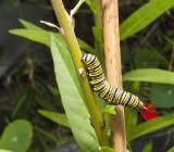 15 March 2013 - caterpillar