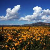 Fields of Gold, Grant, New Mexico