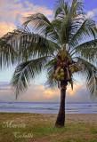 PALM BEACH_0855ab.jpg