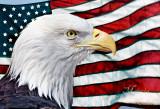 PATRIOTIC AMERICAN BALD EAGLE_1542.jpg