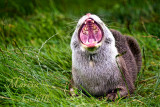 OPEN WIDE AND SAY AWWW_4876.jpg