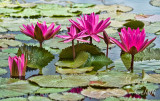 WATERLILY 3834.jpg