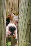 CAN I COME OVER AND PLAY?_6439 .jpg