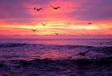 Cabo sunrise x_6505.jpg