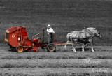 AMISH FARMER--9901-SC.jpg