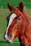 HORSE-2982.jpg