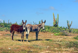 DONKEYS IN ARIKOK NATIONAL PARK -0655.jpg