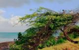 DIVI DIVI TREE-0870.jpg