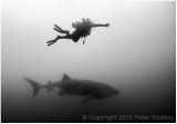 A really big fish....