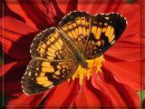 WV ~ Symbiosis in the Garden ~  2006