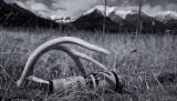 Antler & Steph's 400mm Lens  (Canada1_042013_903-1.jpg)