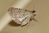 Moth-sp.---12-Sept-2012---0078.jpg