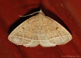 Moth-sp.----6-Sept-2012---0505.jpg