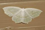 Pale Beauty---0503.jpg