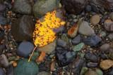 Leaf along Nooksack River, HDR image