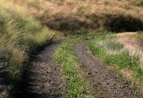 Who goes there? Road to Dug Bar, Hells Canyon.