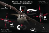 Osprey - Banking Turn