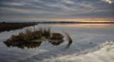 Goegrup grey dawn