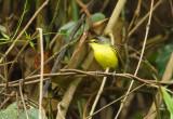Birds of Brasil