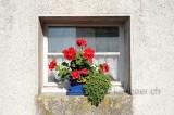 Fenster (126762)
