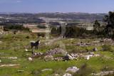 Planalto de Cezaredas