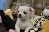 The Goonies - 7 precious puppies