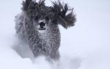 Ren och skär glädje, att springa i snö!