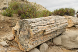 Petrified Log (2388)