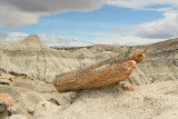 Petrified Log, Bus in Background (2400)