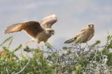 Birds - 2012