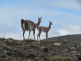 Patagonia 2012 -- Wildlife