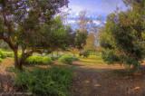 Library Park 15mm HDRt.jpg