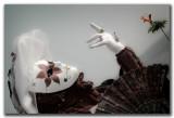 flaneries_au_miroir_2012