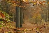 Herfstlaan / Autumn Avenue  Gasselte (Drente
