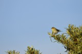 DSC_4571  / Vogelenzang