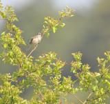 DSC_4101 / Vogelenzang