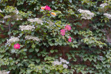 Flowered wall