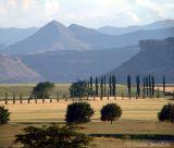 Sandstone Estates wheat and the Malutis