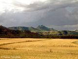 Summer wheatlands