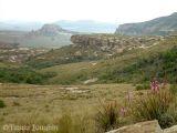Watsonias on Thaba Thabo