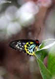 0229-butterfly.jpg