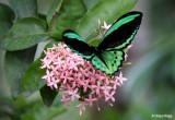 4497-butterfly.jpg